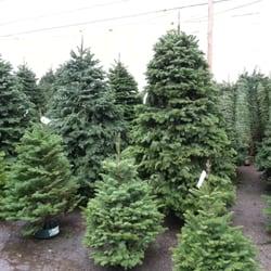 photo of sundance christmas tree nursery san francisco ca united states trees - Christmas Tree Nursery