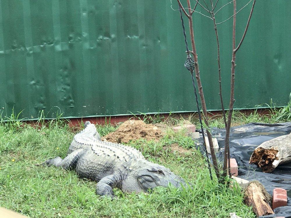 Critchlow Alligator Sanctuary: 1698 M 66, Athens, MI