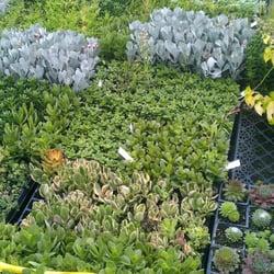 Photo Of Lady Slipper Rare Plant Nursery Woodstock Ga United States