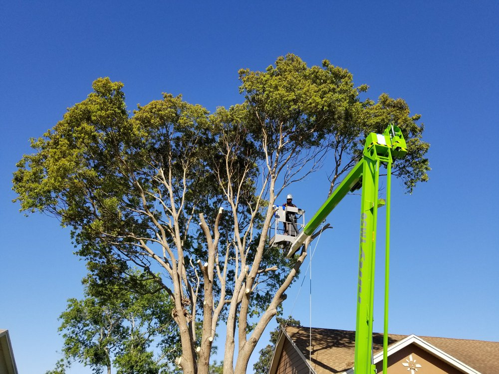 KNC Tree Service: Astor, FL