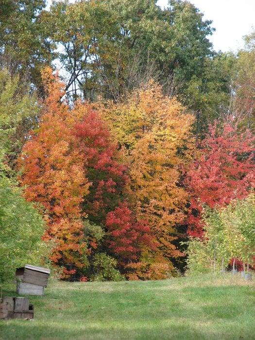 Currier Orchard: 9 Peaslee Rd, Merrimack, NH