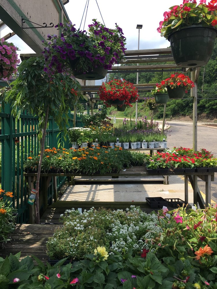 Chelse's Greenhouse: 5020 William Penn Hwy, Murrysville, PA