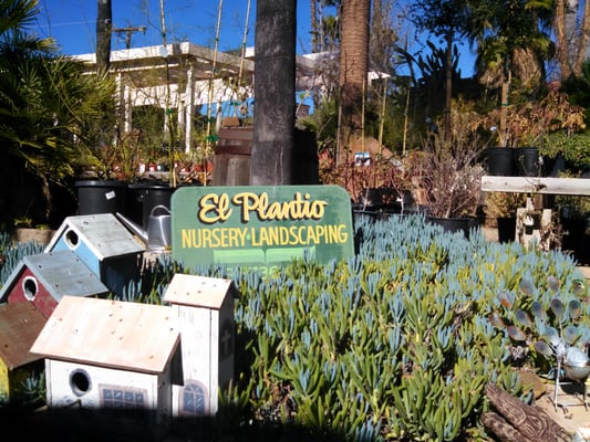 El Plantio Nursery 1322 San Pasqual Valley Rd Escondido Ca Nurseries Mapquest