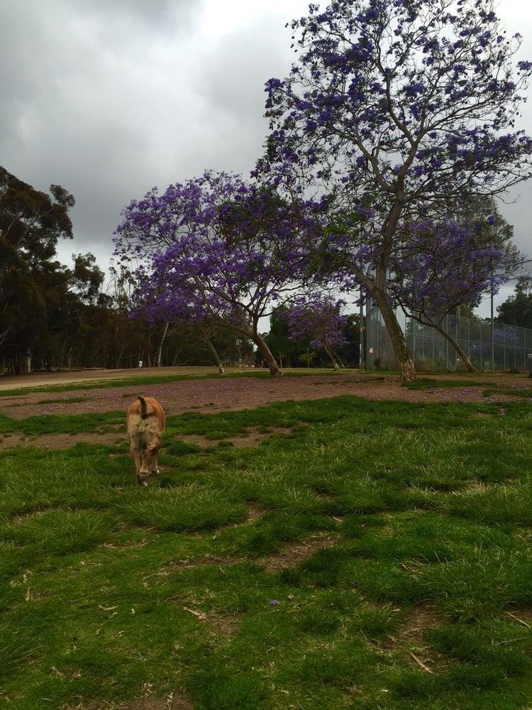 Grape Street Dog Park San Diego Ca