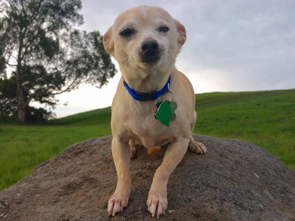 Grateful Dogs Rescue: San Francisco, CA