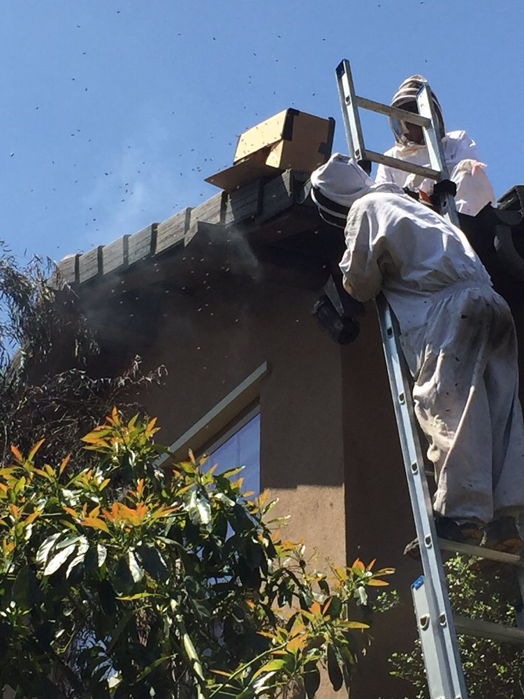 We Save Bees: 23785 El Toro Rd, Lake Forest, CA