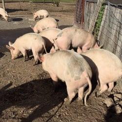 Catskill Animal Sanctuary - 120 Photos & 38 Reviews - Animal