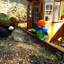 Photo Of Mill Valley Chickens Mill Valley Ca United States