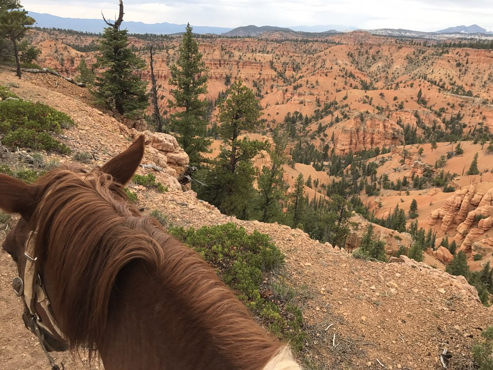 Red Canyon Trail Rides: 2476 W Ut-12, Bryce Canyon City, UT