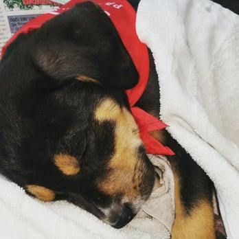 PetSmart - Pet Training - 6143 Hwy 98 Suite 50, Hattiesburg, MS ...
