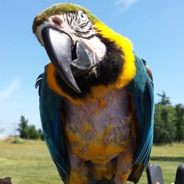 Yelp Reviews for Northern California Parrot Rescue & Rehab - (New