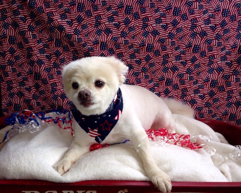 Dog Gone Cute Pet Salon: 717 N Anderson, Choctaw, OK