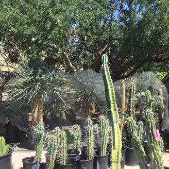 Photo Of Bach S Cactus Nursery Tucson Az United States