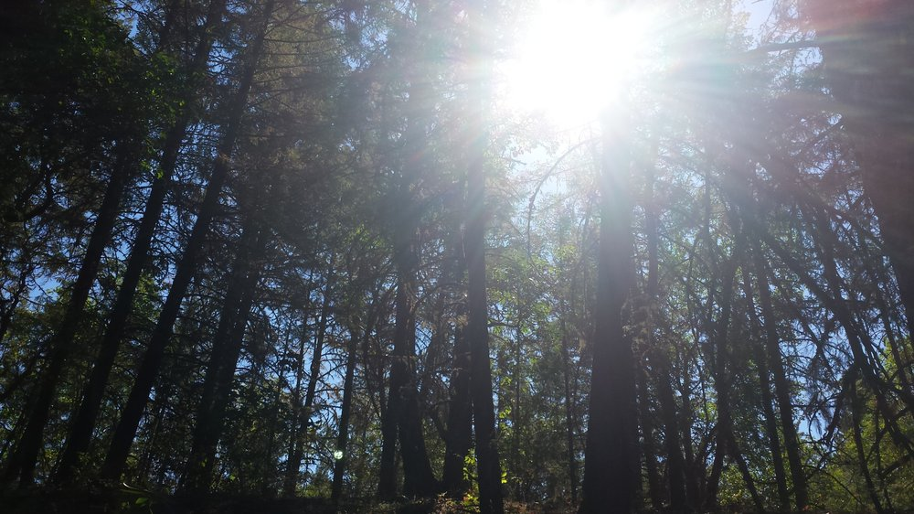 Cathedral Hills Trails: 784 Espey Rd, Grants Pass, OR