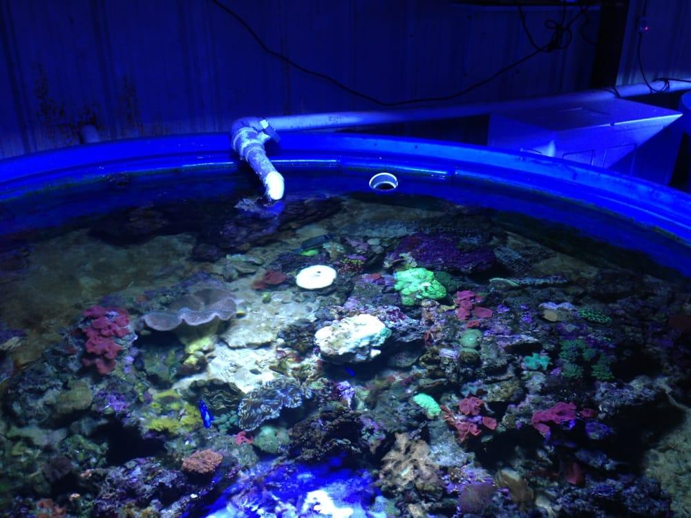 Premium Aquatics: 401 E Center Cross St, Edinburgh, IN