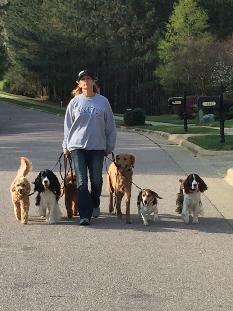 Carolina Dog Training: Apex, NC
