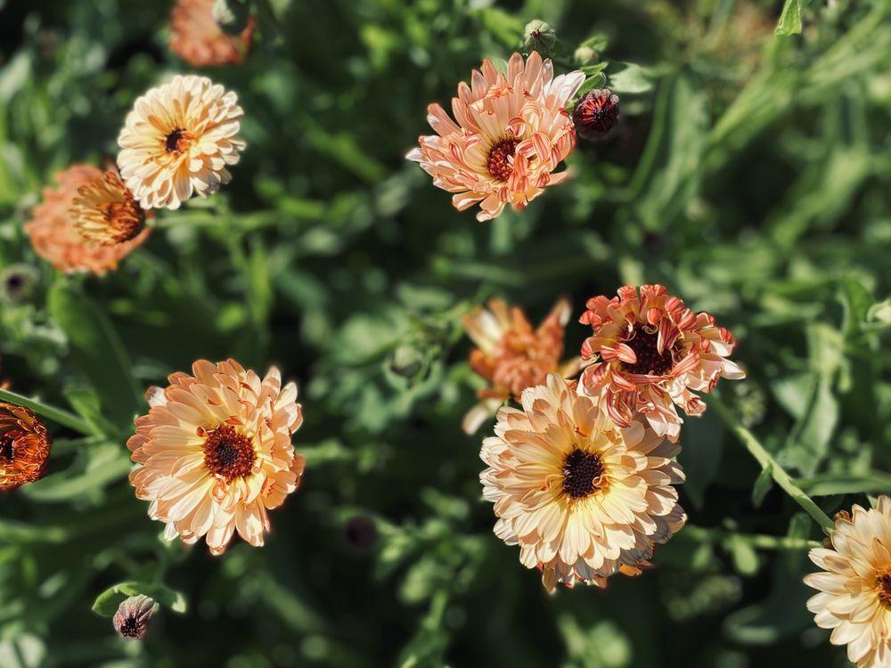 Oxbow Farm & Conservation Center: 10819 Carnation-Duvall Rd NE, Carnation, WA