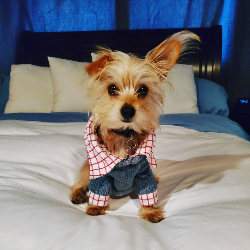 Doggie Dos