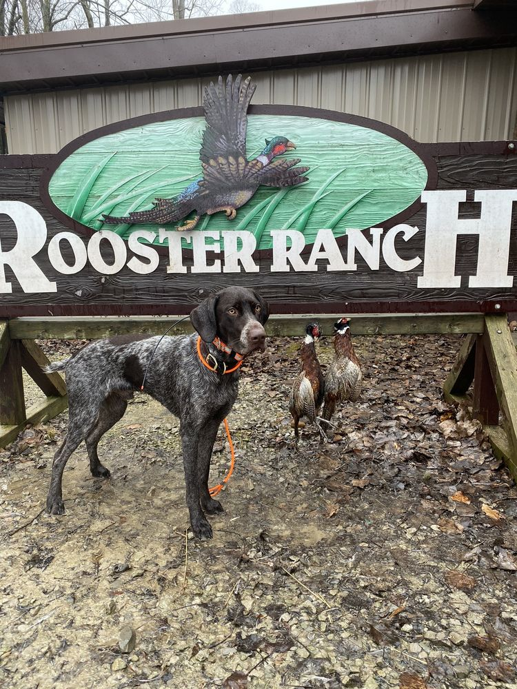 Rooster Ranch: 7480 Germania Rd, Ubly, MI