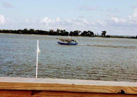 The Blind Tiger Biloxi Beach - (New) 204 Photos & 164