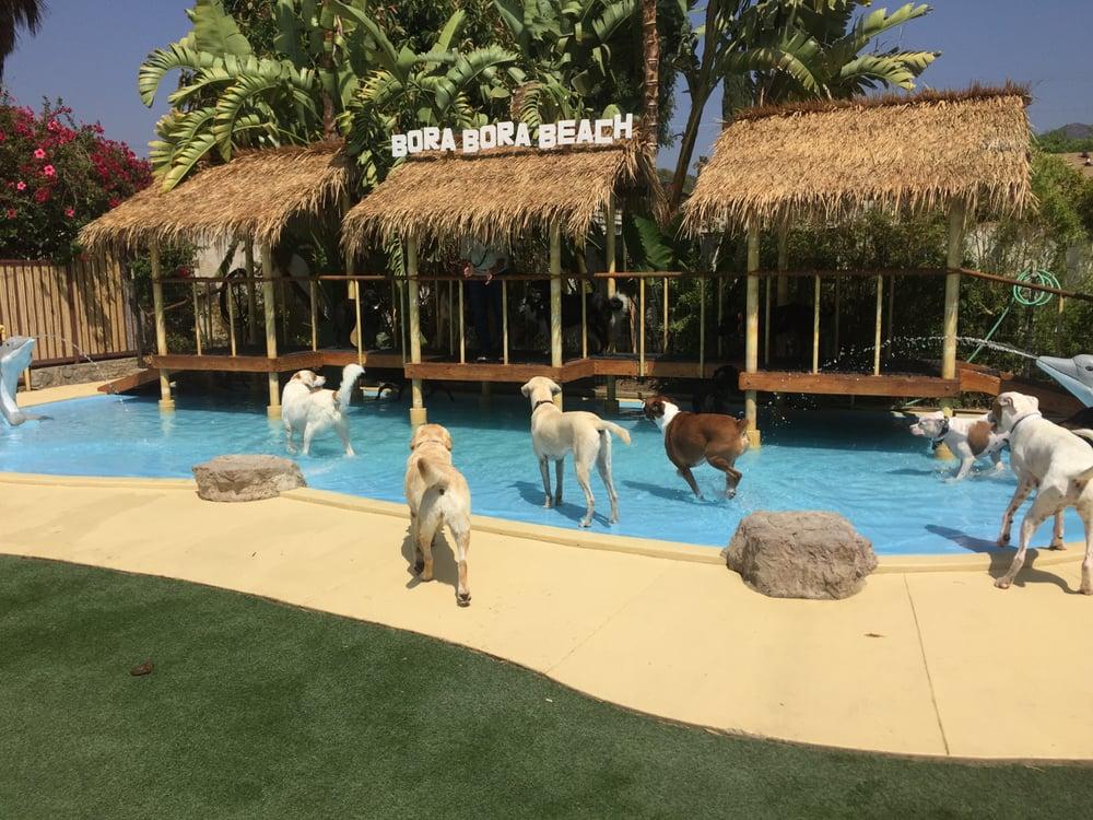 Paradise Ranch Pet Resort: 10268 La Tuna Canyon Rd, Sun Valley, CA