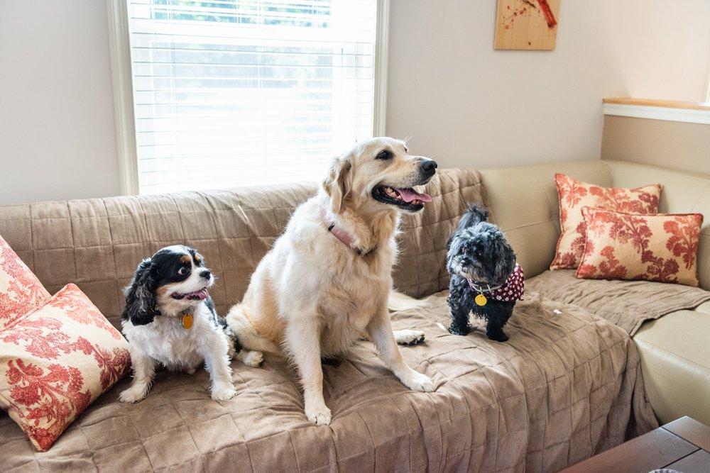 4 Pets' Sake Pet Sitting: 6915 Graymar Ln, Port Tobacco, MD