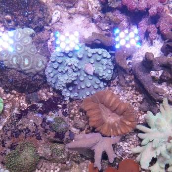 Tropical treasures 10 photos 28 reviews local fish for Fish store phoenix