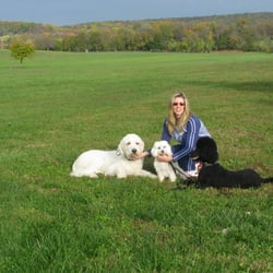 Dog Training In Leesburg