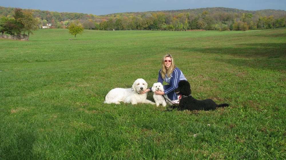 Dog Training Leesburg Fl
