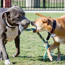 Dr James Thronton Dog Park