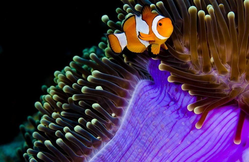 The Aquarium Connection