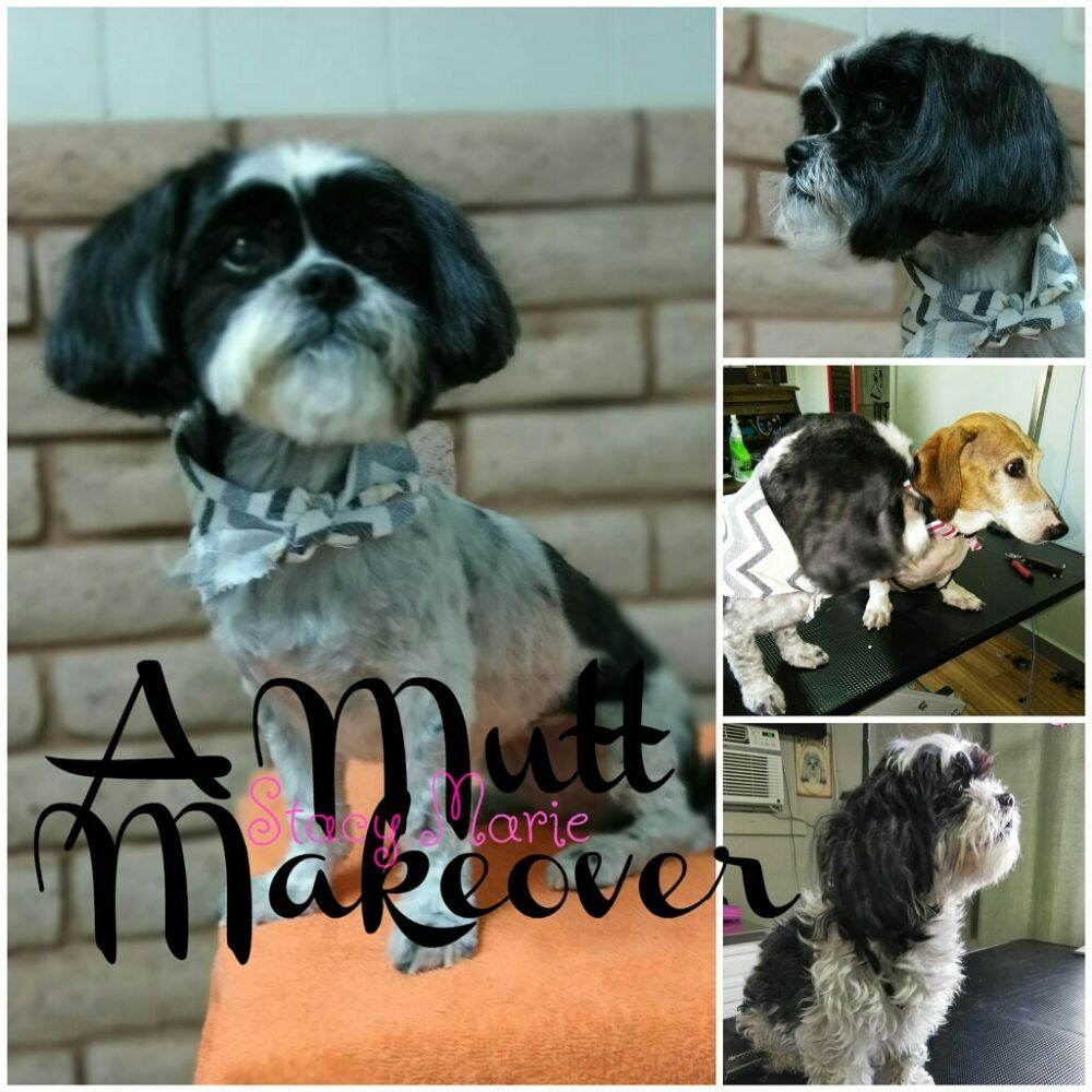 A Mutt Makeover: 1404 East Evans Ave, Pueblo, CO