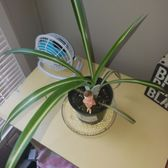 Charmant Photo Of Green Thumb Indoor Garden Supply   Puyallup, WA, United States. One