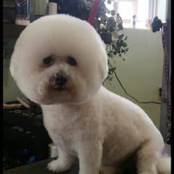 Bark N Barber Get Quote 13 Photos Pet Groomers 408 W 92nd St