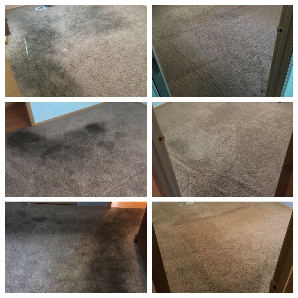 3 Rooms 5 Years Of Old Pet Stains And Walking Paths Yelp
