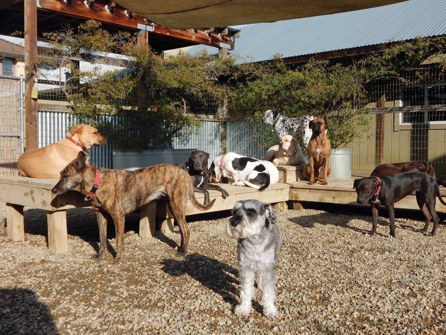 Sonoma dog camp 10 reviews pet boarding pet sitting for Dog boarding places near me