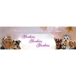 Yorkies Yorkies Yorkies Pet Breeders Marlton Nj Phone Number