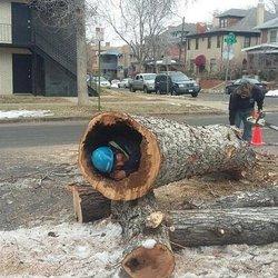 Sandoval's Tree Care - 982 S Ironton St, Aurora, CO - 2019