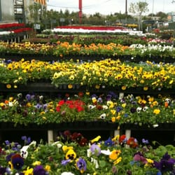 Houston Garden Center 12 Reviews Nurseries Gardening 525 W