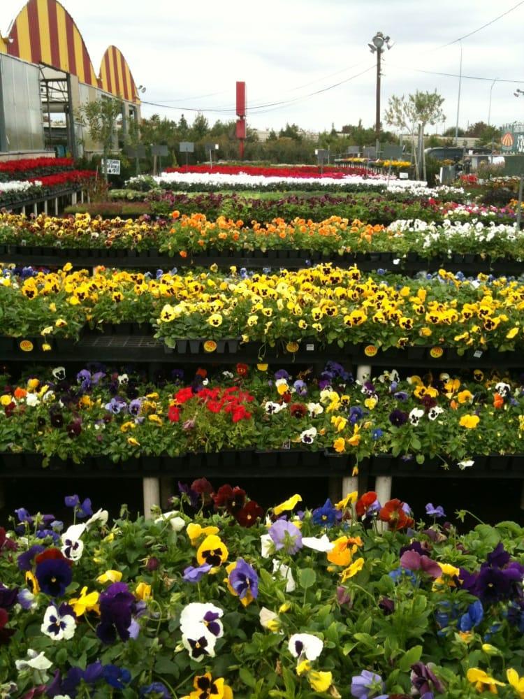 Houston garden center 12 reviews nurseries gardening 525 w grand pkwy s katy tx Houston garden centers houston tx