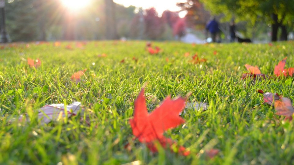 Green Seasons Lawn & Tree Service: 912 E Madelyn Dr, Kearney, MO