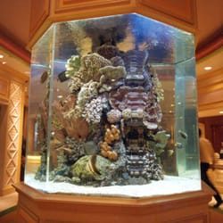 Photo Of Living Art Aquatic Design   Los Angeles, CA, United States ...