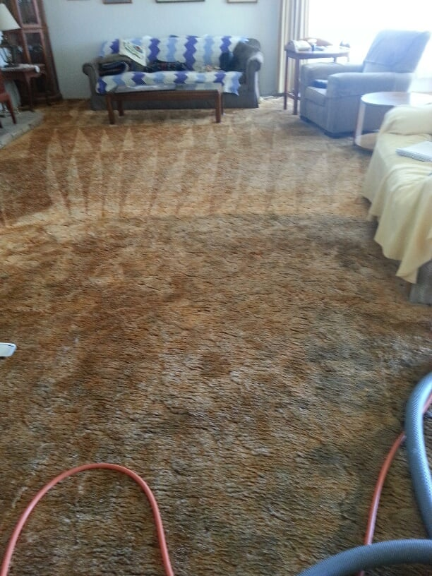 General Carpet, Upholstery, Tile & Rug Cleaning   29878 Baltic Ct, Hayward, CA, 94544   +1 (510) 727-9184