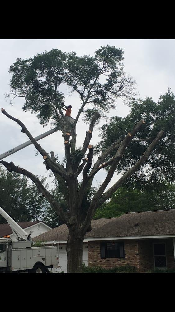 D&D Tree Service: 349 Rose St, Umatilla, FL