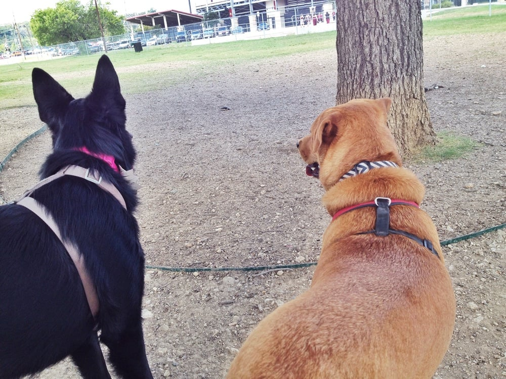 Dog Park San Marcos Tx