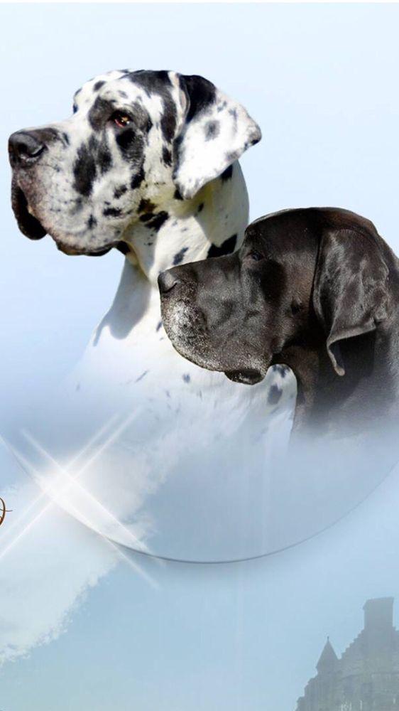 Hooves & Paws Pet Hospital: 4600 US Hwy 377 S, Aubrey, TX