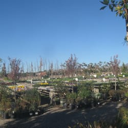 Photo Of Persson S Nursery Pasadena Ca United States Landscape Plants And Color