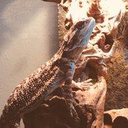 Curious Creatures - 30 Photos & 34 Reviews - Pet Boarding - 4131