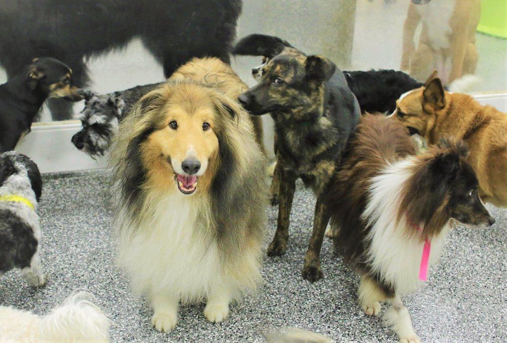 Paw Commons Pet Resort - Encinitas