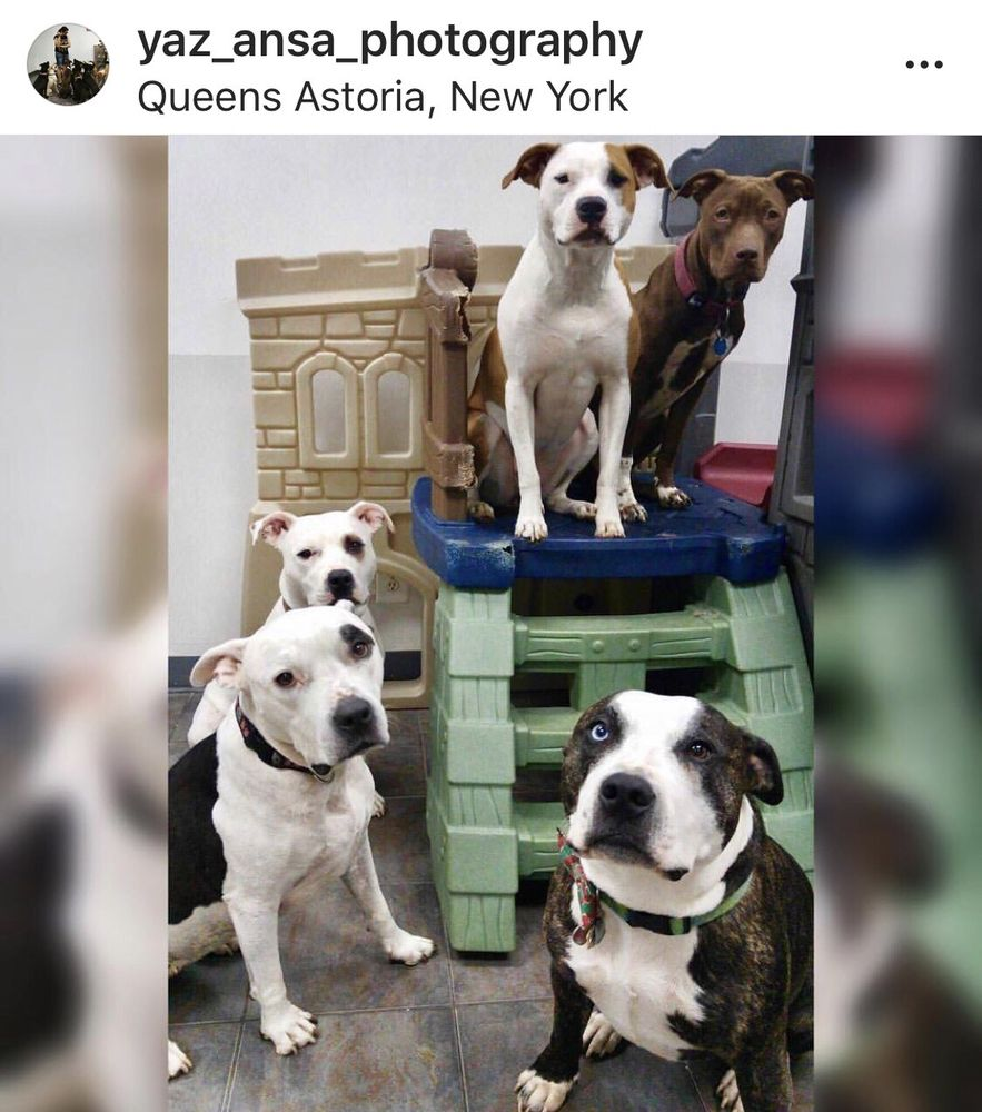 NYC Pet Services